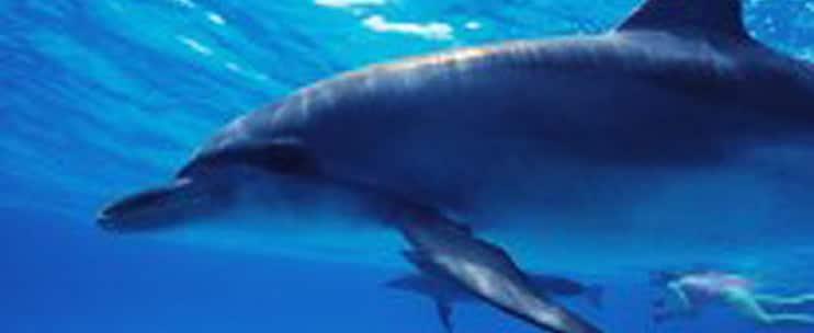 Ocean Encounters – Kealakekua Reef Snorkel