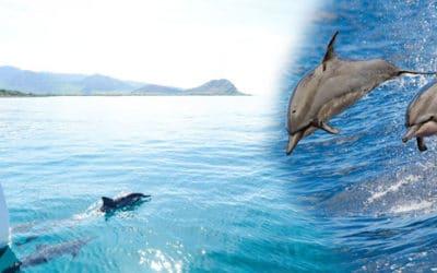 Dolphin Star – Wild Dolphin Watch