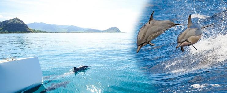 Hawaii Nautical – West Oahu Dolphin Snorkel Sail