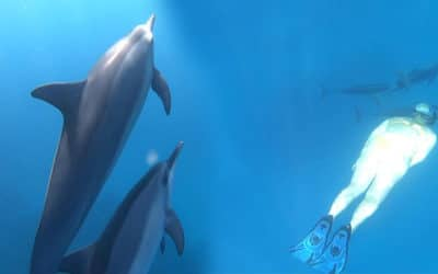 See Life Adventures – Dolphin Swim