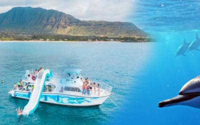 Dolphins and You – Swim with Wild Dolphins Tour