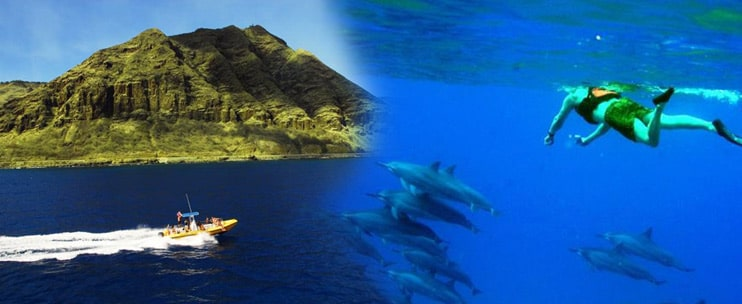 Dolphin Excursions – Wild Dolphin Encounter