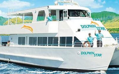 Dolphin Star – Wild Dolphin Watch, BBQ, and Snorkel