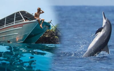 Hang Loose Boat Tours – Wild Dolphin Watch and Snorkel