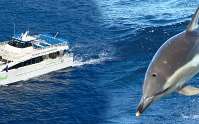 Pacific Whale Foundation – Lanai Snorkel & Dolphin Watch