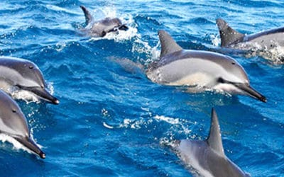 Maui Adventure Cruises – Lanai Dolphin Adventure