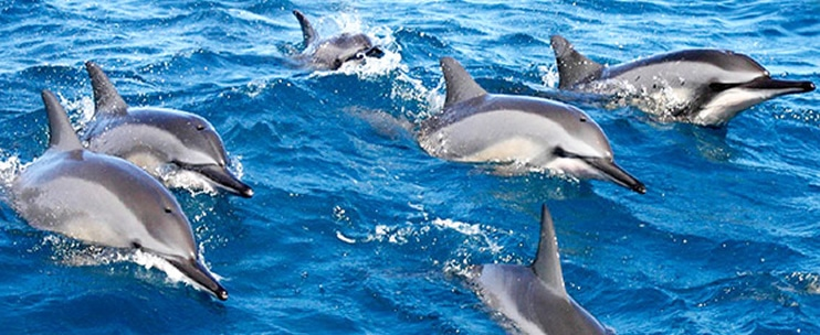 Maui Adventure Cruises – Lanai Dolphin Adventure