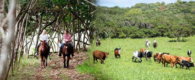 Gunstock Ranch – 1 Hour Scenic Horseback Ride