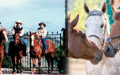 Mendes Ranch – Morning Horseback Ride