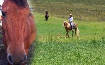 Pa'ani Ranch – Paniolo Ride