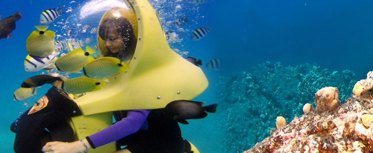 Reef Dancer – 90 Minute Reef Viewing Adventure and Dive Show