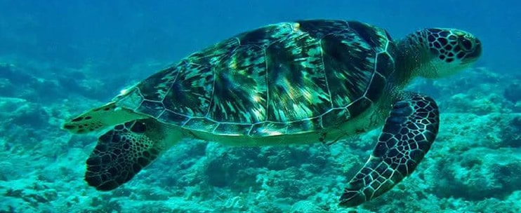 Hawaii Turtle Tours – North Shore Express Tour