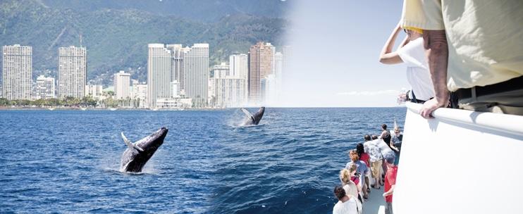 Waikiki Ocean Sports – Whale Watch