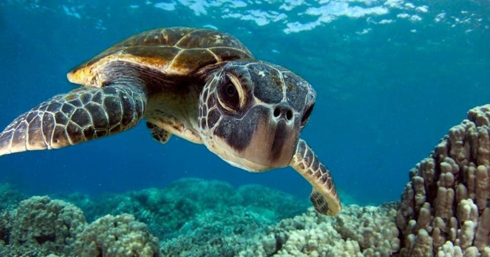 2-Tank Morning Dive – Kona Honu Divers