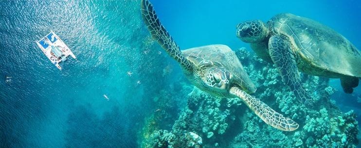 Sea Maui – Lanai Snorkel Sail