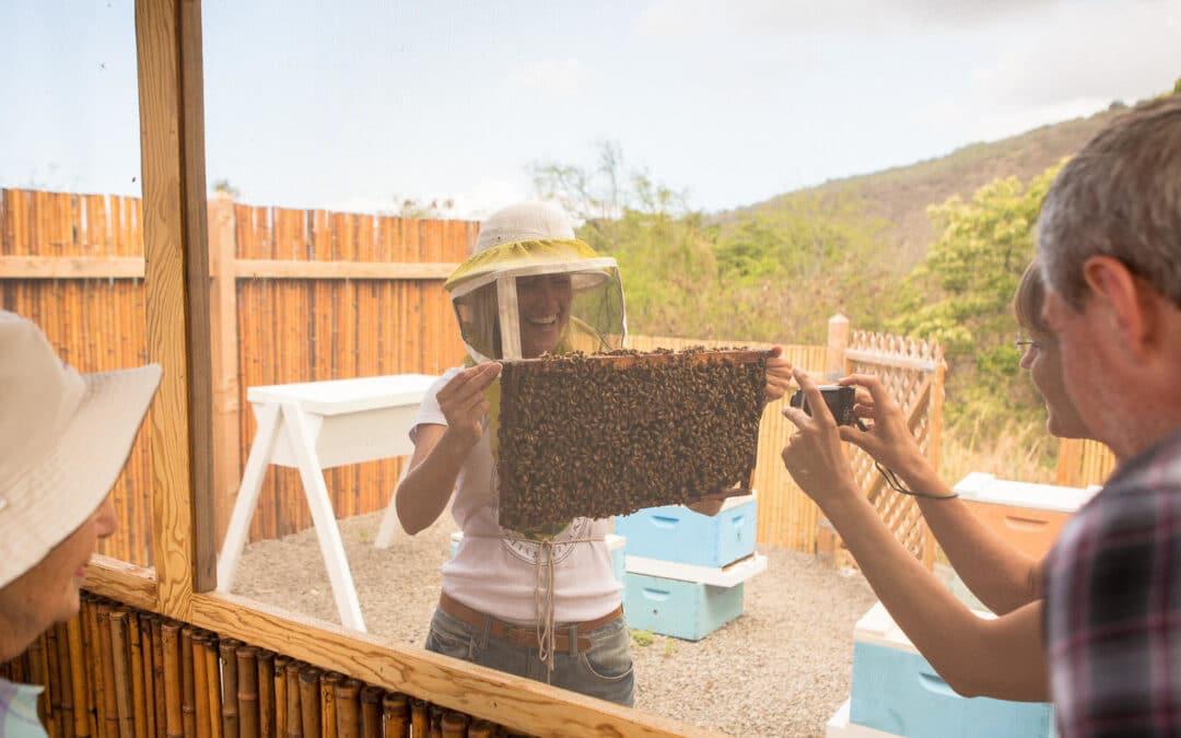 Beekeeping Tour – Captain Cook HI