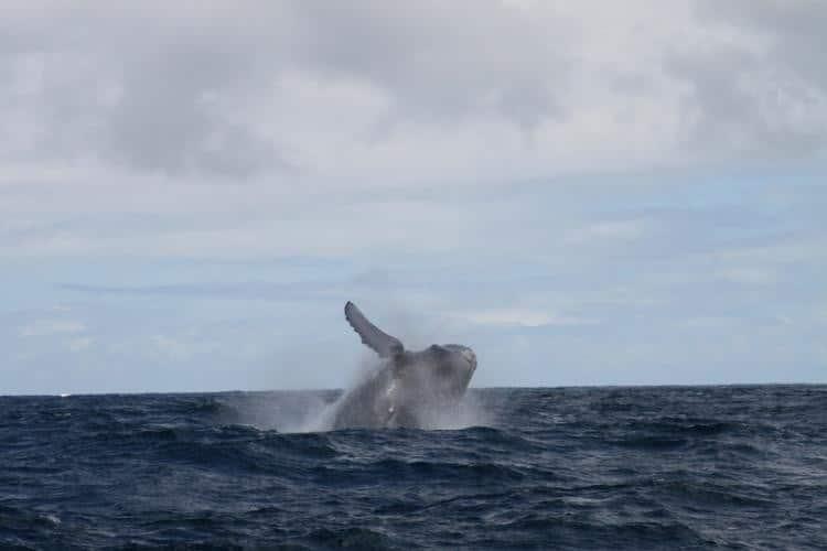 Afternoon Whale Watch -Haleiwa, Oahu